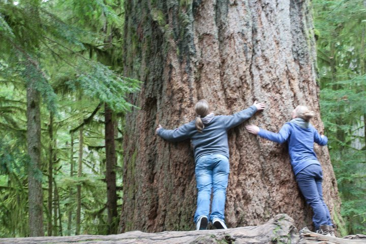 Tree Hugging in Cathedral Grove